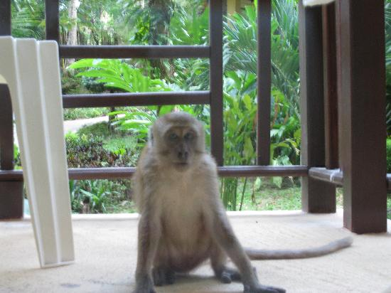Tonsai Bay Resort: Monkey looking into our bungalow
