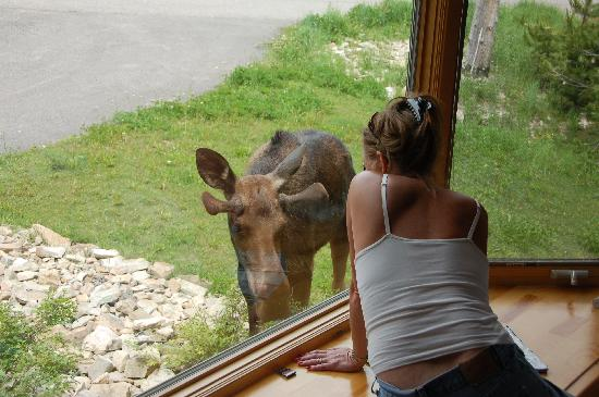 Big Sky, MT: my daugher saying good morning to a Moose right outside our window