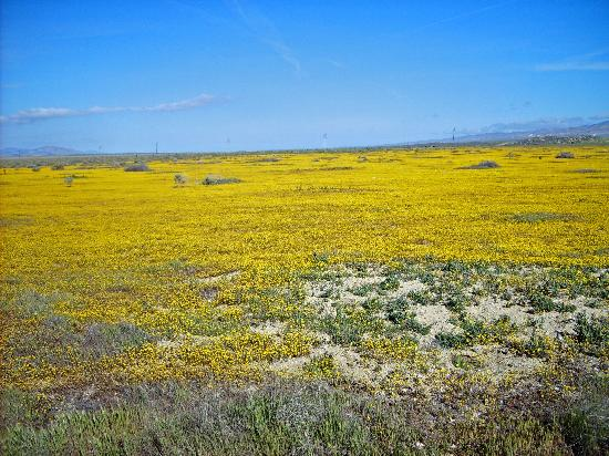 Soda Lake: Amazing color - spring flowers
