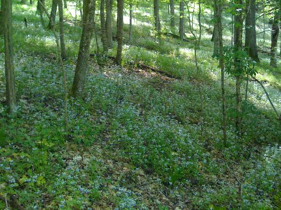 Raven Run Nature Sanctuary: wildflowers