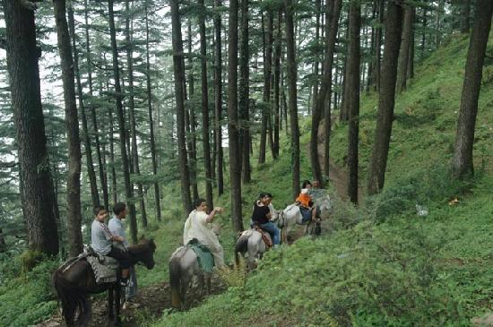 Shimla, India: Horse riding in the hills of Naldehra