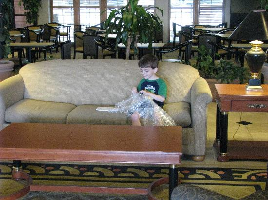 Wingate by Wyndham Streetsboro/Cleveland Southeast: Trevor in Lobby with bubble wrap his new freind Luanne gave him