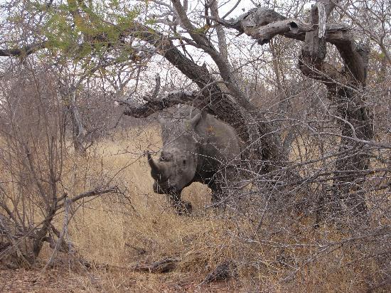 Elephant Plains Game Lodge: Elephant Plains