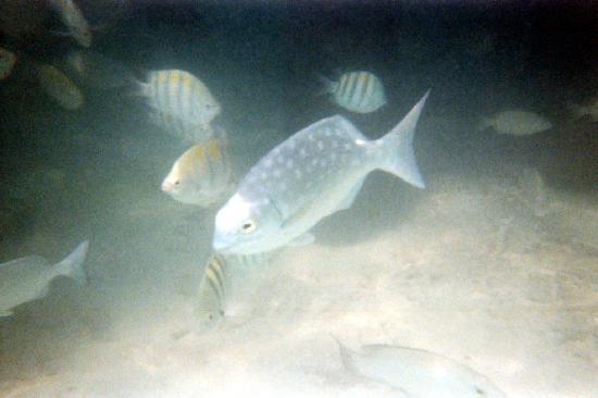 Plenty of fish foto di akumal riviera maya tripadvisor for Plenty fish com