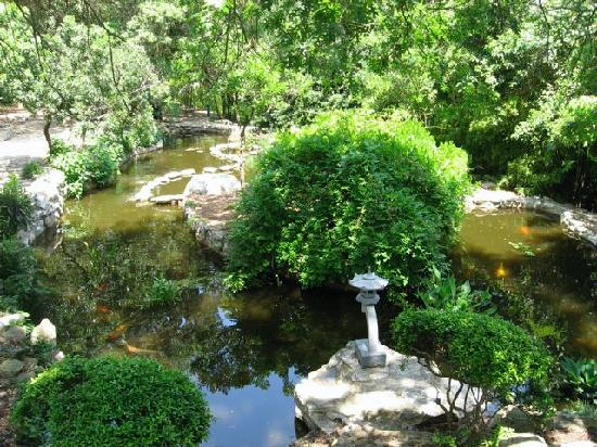 Zilker Botanical Garden: Koi pond