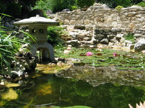 Second pond in japanese garden with lilies in bloom for Japanese pond