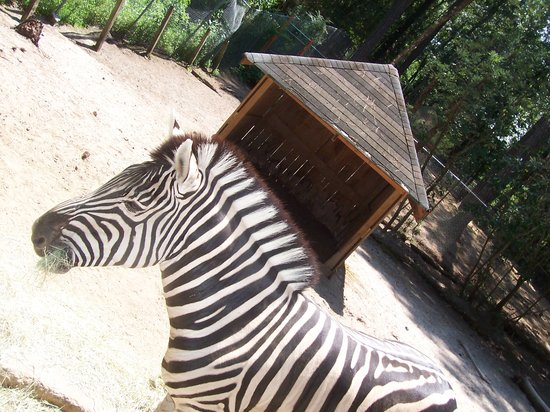 Myrtle Beach, Carolina del Sud: Zig Zag the zebra