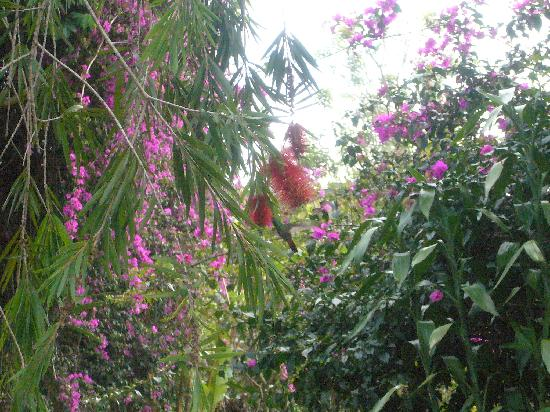 Villa Pacande: Can you see the hummingbord?