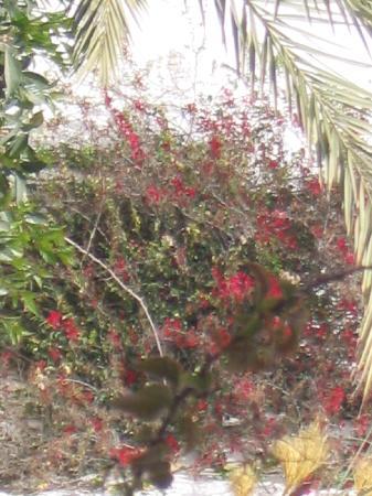 Seabel Rym Beach: mur en fleur
