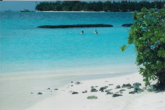 Kuramathi Maldives: the boyfriend snorkling as i sunbathed