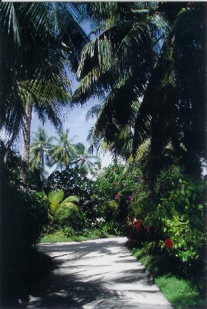 Kuramathi Maldives: what you walk through everyday