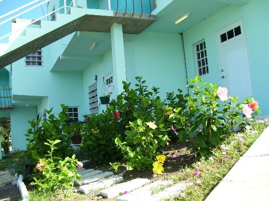 LambLion Holiday Apartments: Hibiscus garden