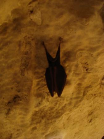 Rouffignac-Saint-Cernin-de-Reilhac, Prancis: bat