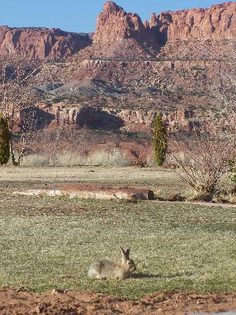 Capitol Reef Resort: Loved the Bunny Rabbits