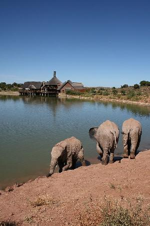 Buffelsdrift Game Lodge: Elephant dip