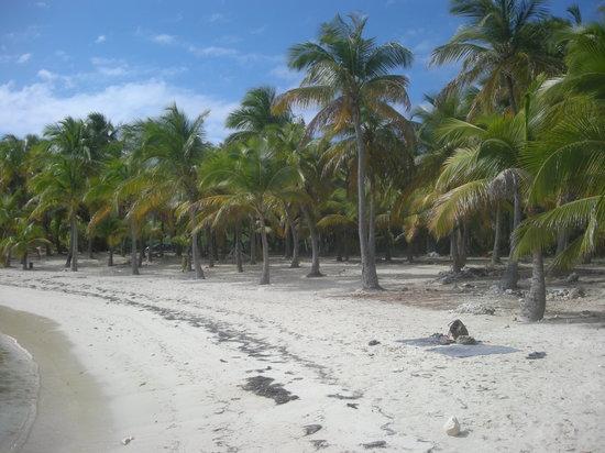 Guadalupe: Anse du Mancenillier, St François