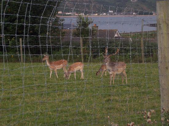 Glendine Country House: A couple of the deer