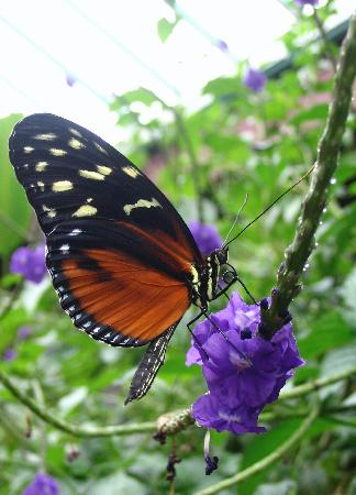 Central Saanich, Canada: One of the thousands of butterflies