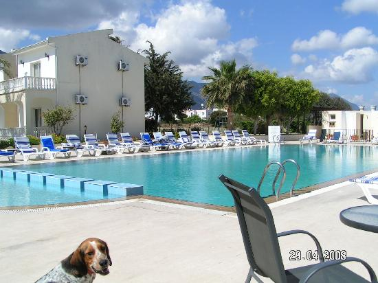 Mountain View Hotel & Villas: Pool and Mountain (the dog!)