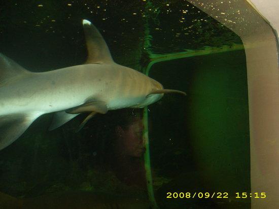 Alghero Aquarium