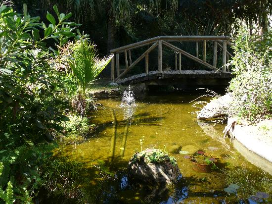 Jardines Del Mar Apartments: Garden