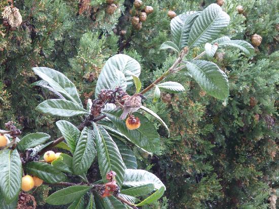 Jardines Del Mar Apartments: Flora