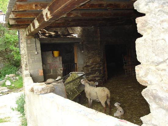 Meranges, Spanien: Animals living under house!