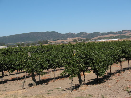 Sonoma, Californien: The vinyards