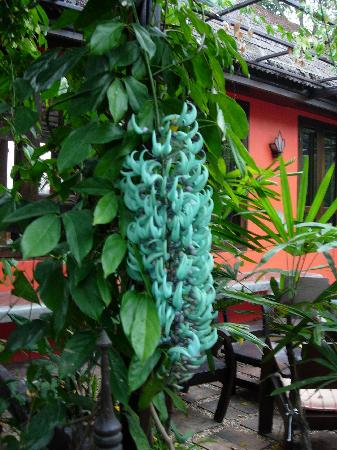 Baan Nam Ping Riverside Village: amazing green flower @ baannamping