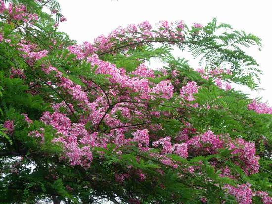 """Baan Nam Ping Riverside Village: flower 's name """" chaiyapruk """"@baannamping"""