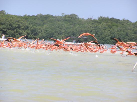 Celestun, Mexico: Approaching flamingos by boat