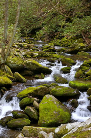 Wyndham Smoky Mountains: Waterfall, Roaring Fork Nature Trail