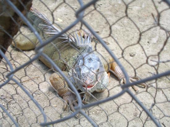 Paradise Island & The Mangroves (Cayo Arena): wildlife habitat