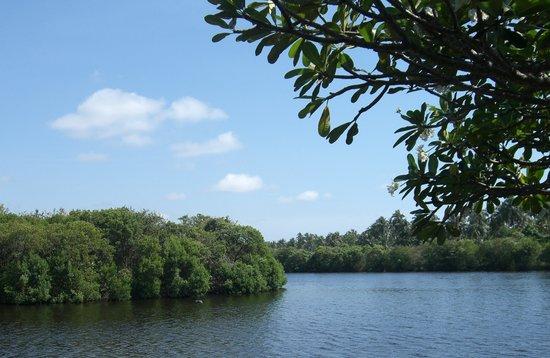 Marawila, ศรีลังกา: vue de la chambre