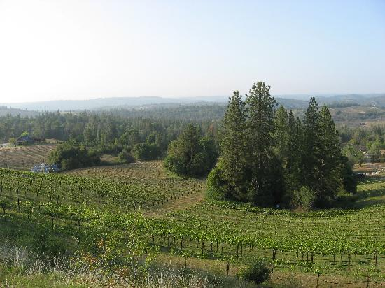 Fitzpatrick Winery and Lodge : View from the dining area deck at the lodge