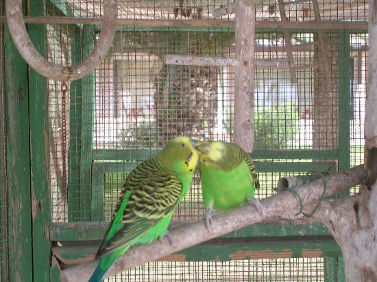 Nissi Beach Resort : les oiseaux du jardins tropicales