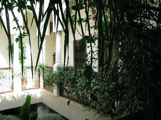 Riad Hayati: beautiful foliage