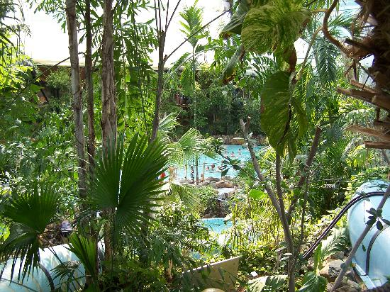 Center Parcs Sherwood Forest: pool from top steps