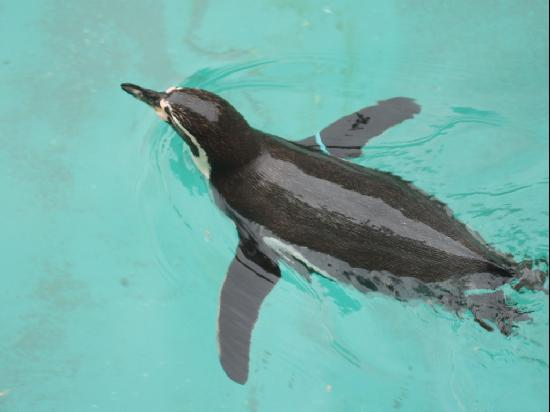 Woodland Park Zoo: Flying Penguin - Woodland Zoo Seattle