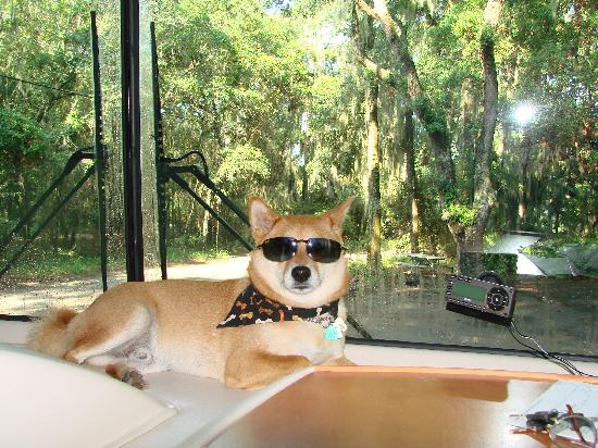 Jekyll Island Campground : Campground is visible through RV window if you look past cool Kip!
