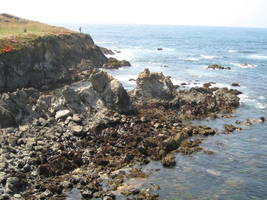 Mendocino Coast Botanical Gardens: Awesome cliff side views