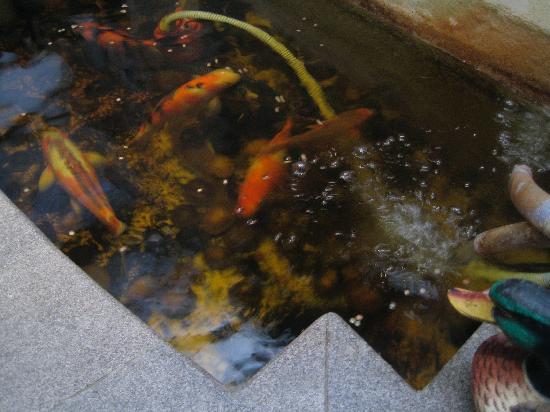 Perak Hotel: Koi carp in pond in breakfast room