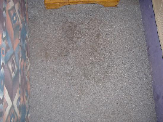 Martinez Lake Resort: Carpet stains all over