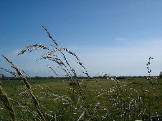 Сен-Валери-сюр-Сомме, Франция: Just some nice grass
