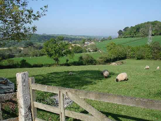 Velwell House Bed & Breakfast: View from Velwell House
