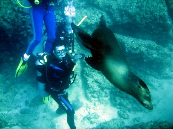 Baja Expeditions: Asi de cerca estas de los lobos marinos en la lobera
