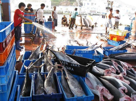 Pucusana District : Local fishmarket