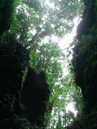 Extreme Dominica Canyoning Experience: Looking up in Titou Groge