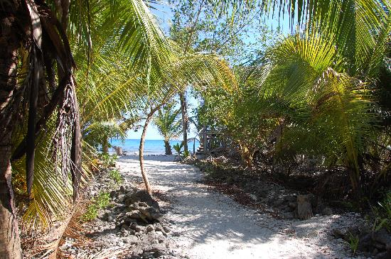 Long Caye Resort: Pathway to one of the cabanas