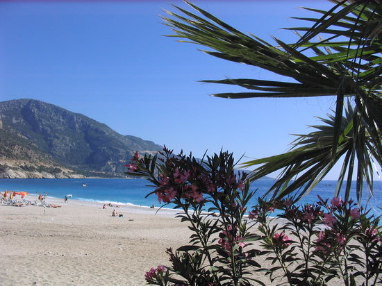 Ovacik, Turkiet: flora and fauna of Oludeniz